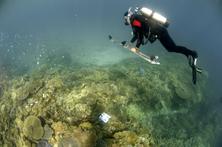 Assoc. Prof. Figueira imaging a reef area at Heron Island, Great Barrier Reef