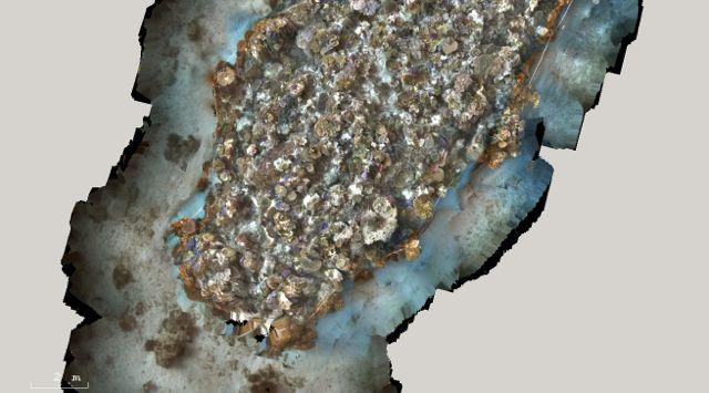3D model of a 30 x 20 meter reef area, One Tree Island, Great Barrier Reef