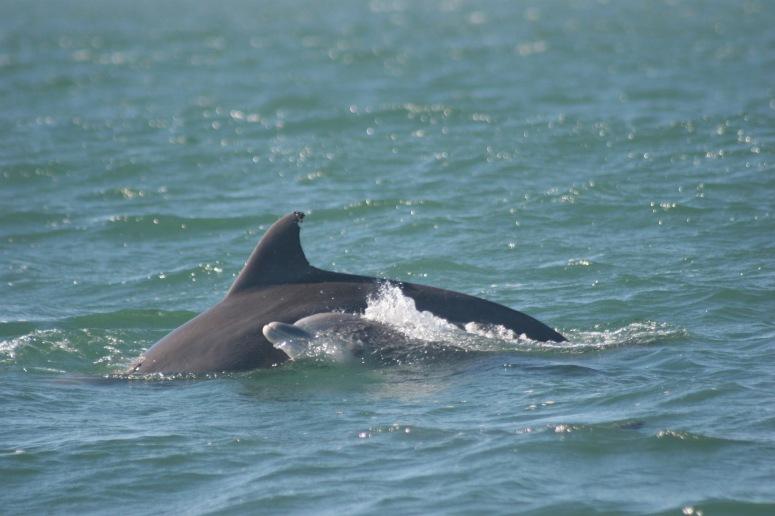 Rhys dolphins